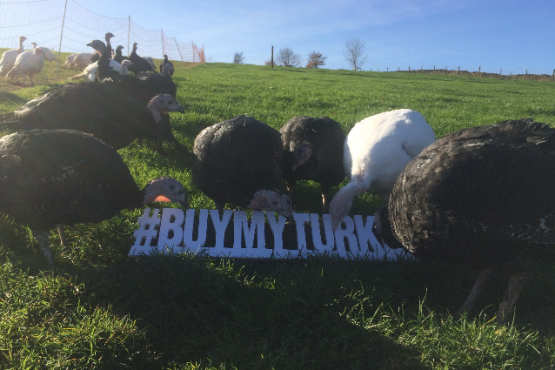 Kent Turkeys take part in #BuyMyTurkey day